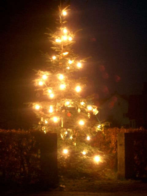 Der Weihnachtsbaum am Denkmal